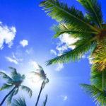フラダンスとハワイの関係って? ダンス以上の存在