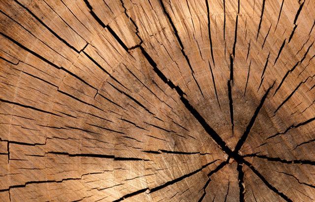 木こり体験で出来ること